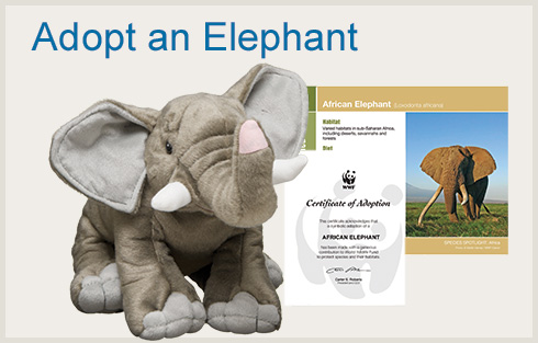 WWF elephant adoption Gifts That Feel Good to Give
